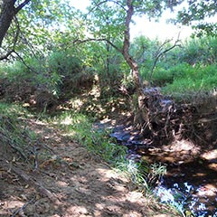 """Mr. Edwards's creek,"" Independence, Kansas."